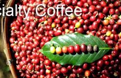 關於咖啡名詞,中文翻譯的謬誤