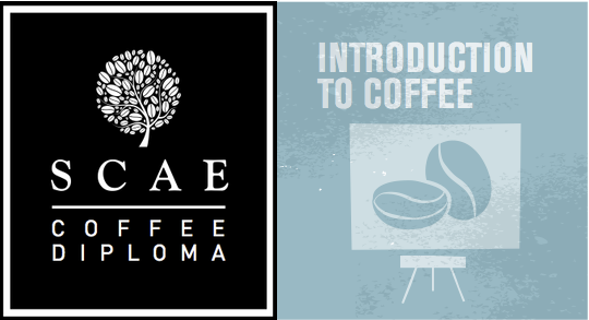 SCAE & Intro to Coffee