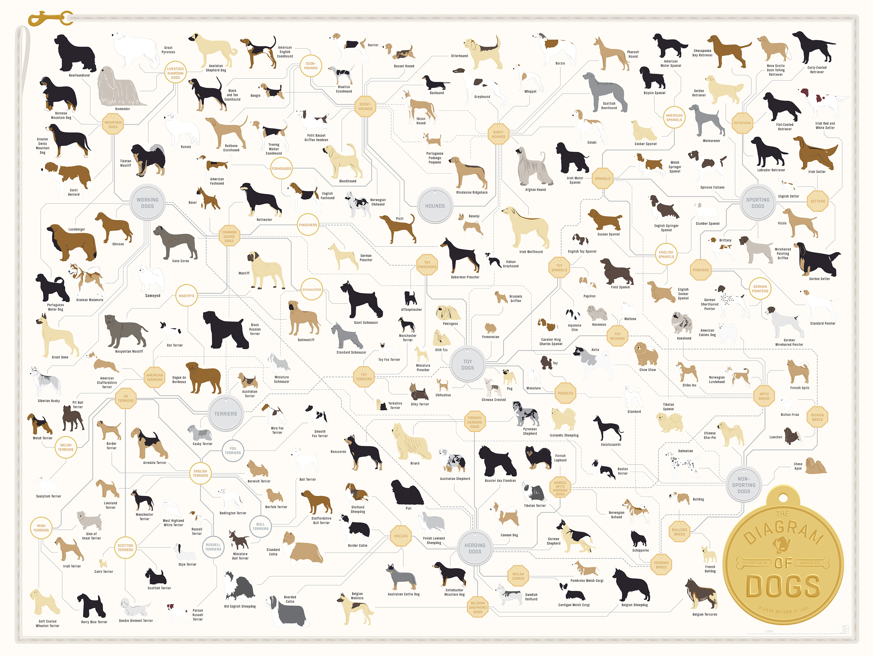 Dog chart mersnoforum dog chart ccuart Choice Image