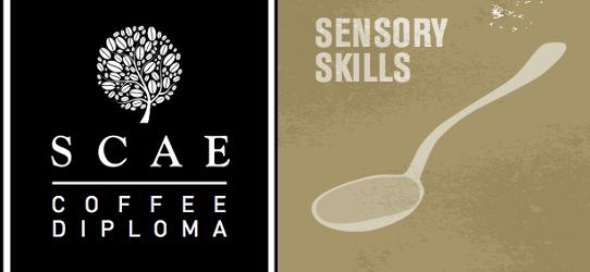 SCAE Certificate – Sensory Skills (Intermediate) ($7200)