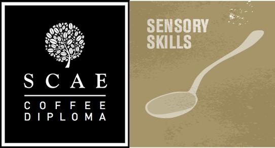 SCAE Sensory Skills Module